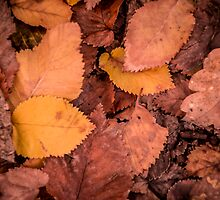 Autumn Leaves by Pink Poppy  Photography
