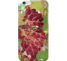 Colorful grape leaf iPhone Case/Skin
