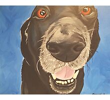 Russell the Black Lab Photographic Print