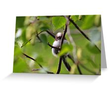 Long Tailed Tit fledgling I Greeting Card