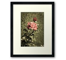 Garden of Roses Framed Print