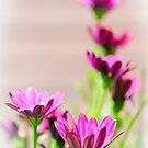 Faded Purple by JEZ22