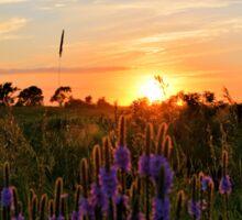 Summer Prairie Sunset Sticker