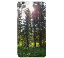 In The Forest Light iPhone Case/Skin