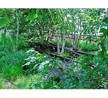 Trees and Track, Horizontal Photographic Print