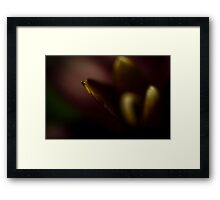 A Point to Life Framed Print