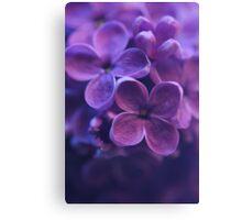Lilac Macro - P Canvas Print