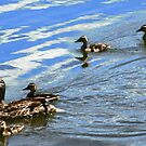 Ducks in a Row by Shulie1