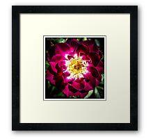 Flower 1 Framed Print