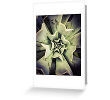 Succulents 3 Greeting Card