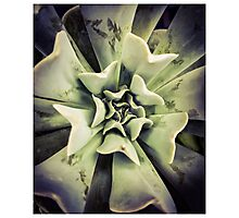 Succulents 3 Photographic Print