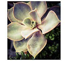 Succulents 4 Photographic Print