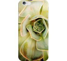 Succulents 6 iPhone Case/Skin