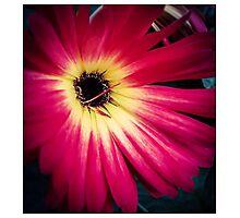 Flower 14 Photographic Print
