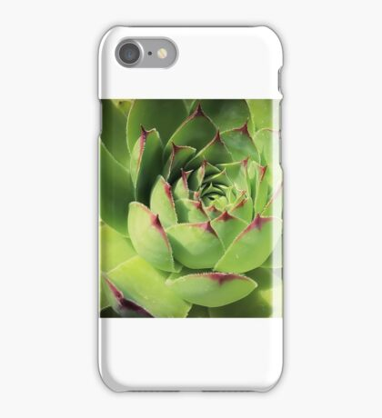 Succulents 11 iPhone Case/Skin