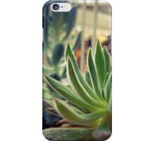 Caged Succulent iPhone Case/Skin