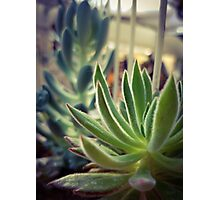 Caged Succulent Photographic Print