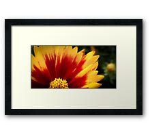 Flower 17 Framed Print