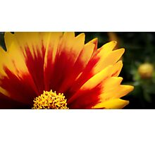 Flower 17 Photographic Print