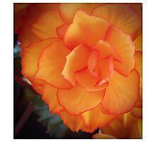 Orange Beauty 2 Photographic Print