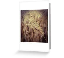 Wheat Grass Greeting Card