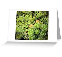 Spiral Succulents Greeting Card