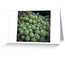 Succulents 13 Greeting Card