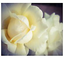 White Fluff Photographic Print