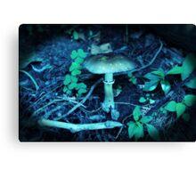 Lomography Mushroom Photography Canvas Print