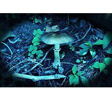 Lomography Mushroom Photography Photographic Print