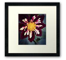 Flower 18 Framed Print