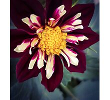 Flower 18 Photographic Print