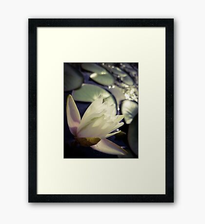 Water Lily at Sunset Framed Print