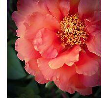 Flower 19 Photographic Print