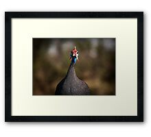 Birdlife on Signal Hill, Cape Town Framed Print