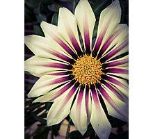 Flower 22 Photographic Print