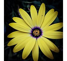 Flower 23 Photographic Print