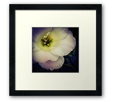 Flower 24 Framed Print