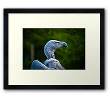 Wise Old Vulture in bokeh Framed Print
