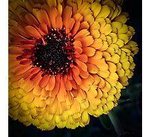 Flower 28 Photographic Print