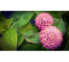 Teeny Flowers Photographic Print