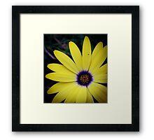 Flower 29 Framed Print