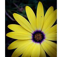 Flower 29 Photographic Print