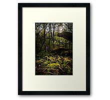 Bluebell dawn Framed Print