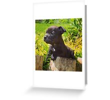 Staffordshire bull terrier puppy  Greeting Card