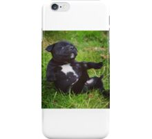 Staffordshire bull terrier puppy iPhone Case/Skin