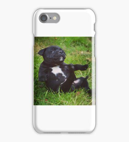 Staffordshire bull terrier puppy iPhone Case/Skin