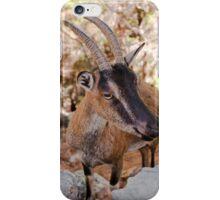 Wild kri-kri goat in Samaria Gorge, Crete, Greece. iPhone Case/Skin