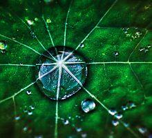 Droplett  by mellosphoto