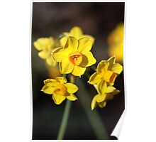 Jonquils Are Dancing Poster